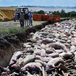 Мертвих российских солдат закопают в скотомогильниках