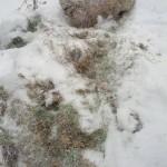 В Донецке выкинули на свалку миллиард гривен