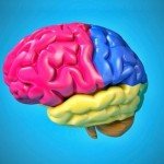 Американские ученые вырастили искусственный мозг