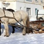 В Омске вместо автобусов будут ездить на лошадях