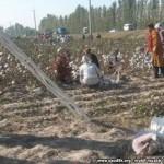 К приезду премьер-министра в Узбекистане приклеили хлопок обратно на поля
