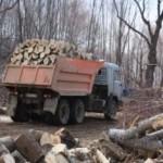 В Крыму очередь на дрова до 2017 года — очевидцы
