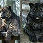 Самые удивительные животные-гибриды