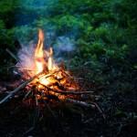 В России будут сажать в тюрьму за собирание дров