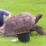 Двухсотлетней черепашке устроили первый в жизни банный день (видео)