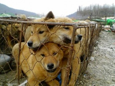 dog-nurong1