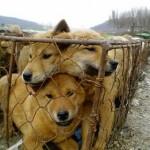 Роспотребнадзор: Россияне стали чаще есть собак