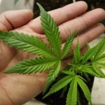Израиль на пути к легализации легких наркотиков