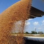 Украина снова бьет рекорды по экспорту зерновых