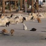 Открылась первая в Израиле клиника для бездомных животных