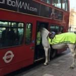 В Лондоне полицейская лошадь пыталась уехать на автобусе