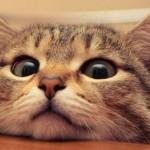 Киевская мэрия признала котов частью экосистемы столицы