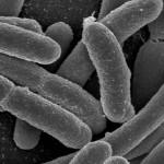 Израильские ученые: антибиотики ускоряют рост бактерий в 20 раз