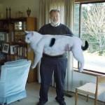 Инженер-атомщик вырастил самую большую кошку в мире