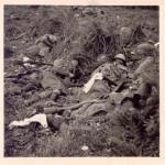 Советский цинизм: удобрения, которые делали из павших солдат Второй Мировой