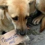 В Киеве построят современный Центр защиты животных