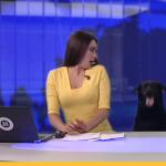 В прямом эфире новостей к ведущей вылезла собака (видео)