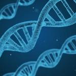 В США впервые произвели успешную коррекцию генов в зародыше