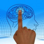 Ученые «увидели», как мозг освобождает место для новой информации