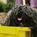 Костюм собаки-тряпки претендует на звание самого очаровательного наряда на Хеллоуин
