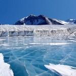 «Детеныш Ктулху!» — в Арктике нашли загадочного планктонного «монстра» (фото)