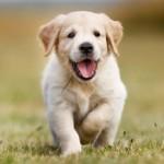 Ученые: у владельцев собак более крепкое сердце