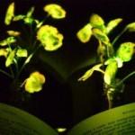 Удивительная технология — Светящиеся растения заменят фонари и светильники