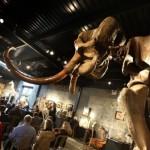 Скелет шерстистого мамонта из Сибири купили за полмиллиона евро