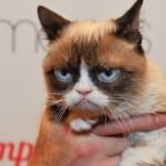 В США кошка отсудила 700 тыс. долларов за авторские права