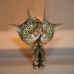 В США кот вернулся домой после 14 лет скитаний