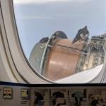 Боинг United Airlines начал рассыпаться на лету (видео)