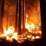 Лесные пожары охватили 13 регионов РФ