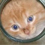 Сеть покорило видео, на котором кошка освобождает котенка, застрявшего в банке
