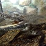В аэропорту Лондона арестовано 50 крокодилов