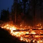На Дальнем Востоке за сутки выгорели более 100 гектаров леса