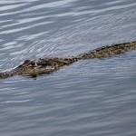 Мать отбила у крокодила, своего сына
