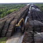 Китайская пресса о вырубке леса в РФ: Сибирь является территорией Китая
