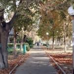 Из отравленного Армянска исчезли все птицы, деревья облысели.