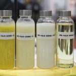 Импортозамещение, или есть нечего. Россия увеличила импорт пальмового масла на 19%