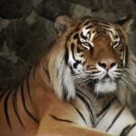 За последние 40 лет человечество уничтожило 60% животных на планете — ученые