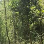 4.11.2018, 07:20 В Китае обнаружили чайное дерево, не содержащее кофеина