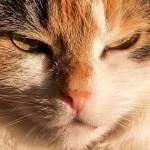 Ученые назвали неожиданную опасность кошек для их хозяев