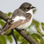 Из-за глобального потепления птицы становятся агрессивнее