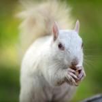 Редчайшую белку-альбиноса сняли на камеру