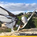 Радиоуправляемый робот-насекомое может поступить в продажу (видео)