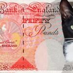 Кот из Англии своровал деньги у соседей и принес их хозяйке