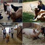 «Freedom Farm»: убежище для животных с ограниченными возможностями в Израиле