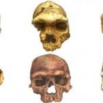 Ученые проследили, как изменилось лицо человека за миллионы лет эволюции