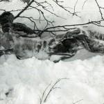 Гибель на перевале Дятлова — туристы были оглушены, а затем уложены в снег (фото)
