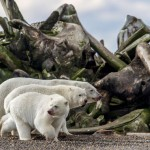 Призеры конкурса фотографий BigPicture Natural World Photography 2018